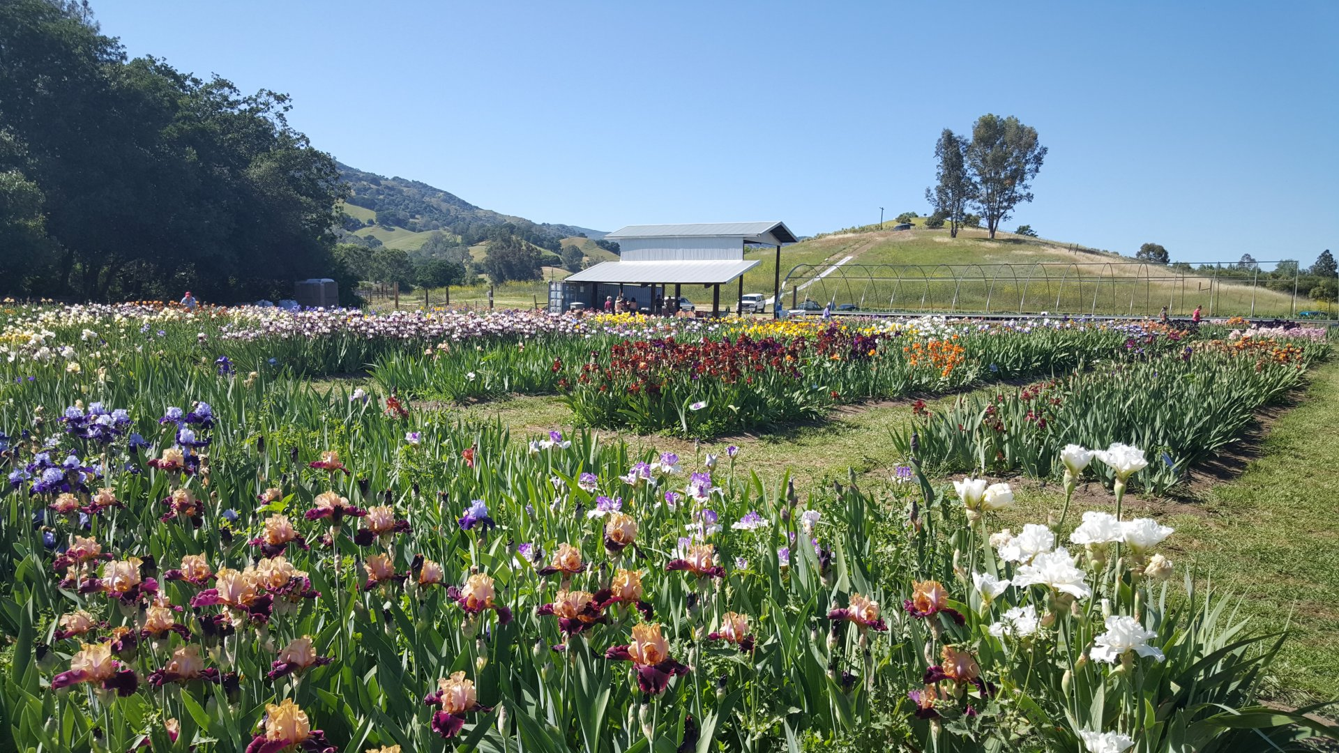 Discover the home-grown side of Solano County and explore local farms, produce stands, and farmers markets.