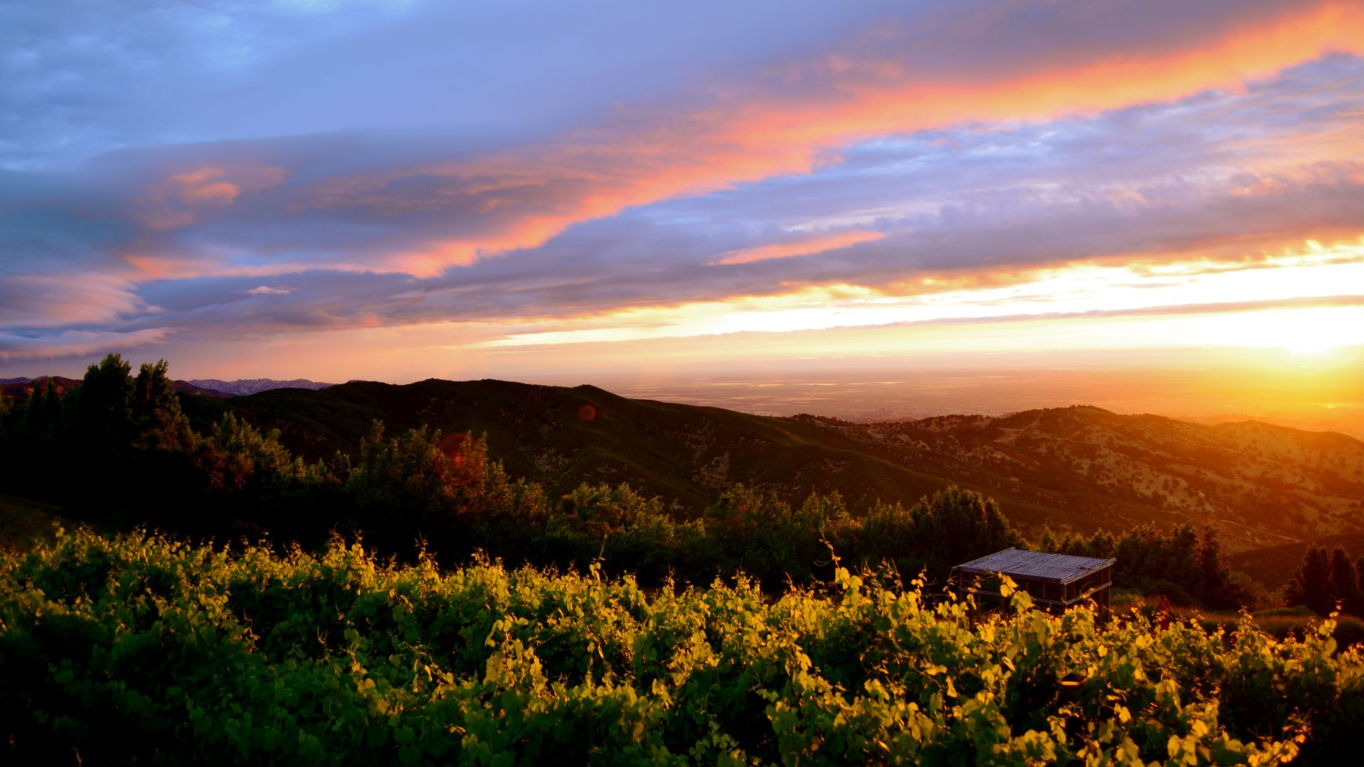 Experience California wines in delightfully unpretentious Suisun Valley