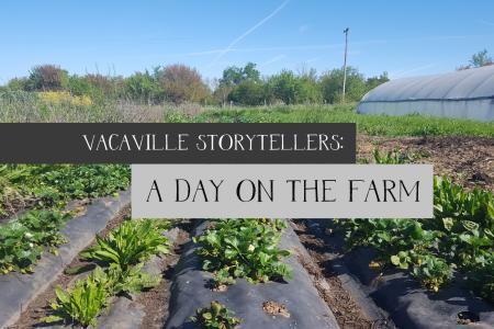 A day on the farm-2