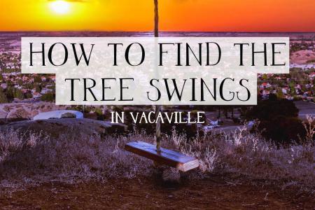 Tree swings-2